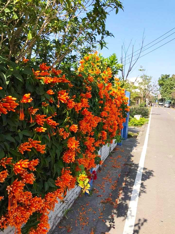 潭雅神自行車道旁盛開的花朵