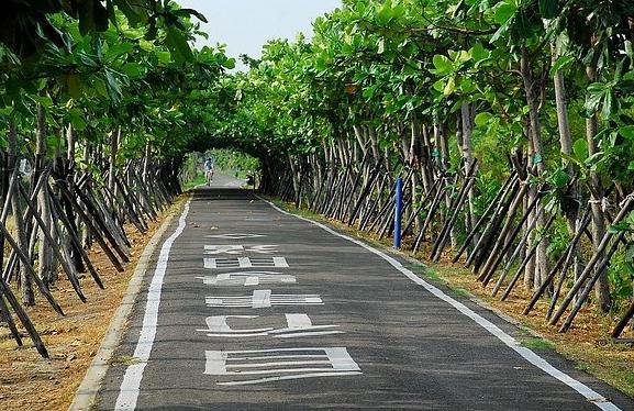 兩旁綠蔭的新竹17公里海岸線